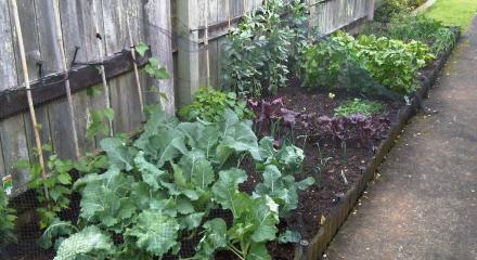 The vegie garden