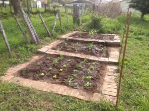 Vegie garden planted